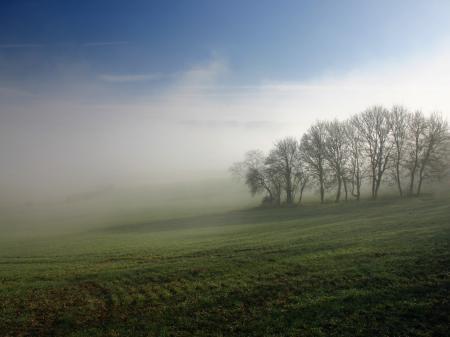 Заставки газон, деревья, туман, рассвет