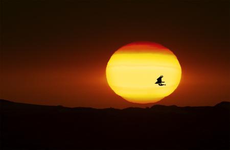 Картинки закат, горячий, солнце, охотник