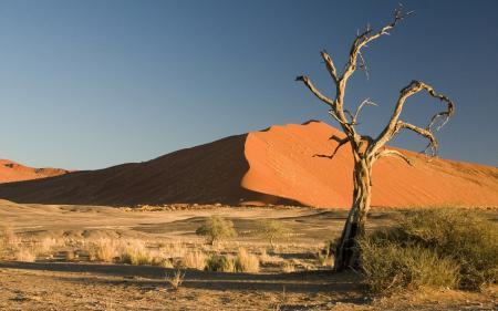 Обои пустыня, пески, сухое, дерево