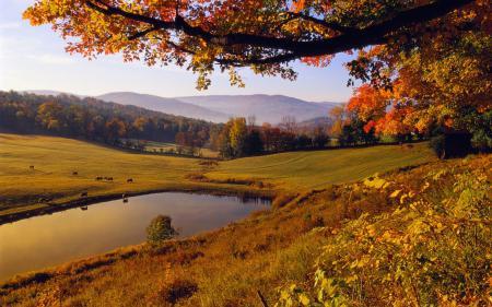 Заставки природа, осень, листья, желтый
