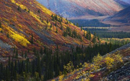 Картинки холмы, лес, осень