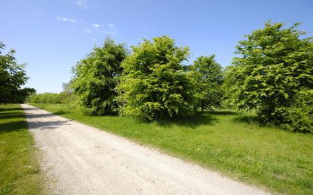 Картинки дорога, небо, трава, деревья