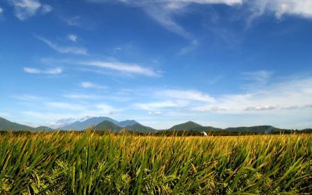 Картинки пейзажи, поле, поля, природа