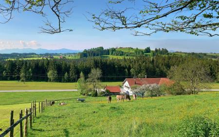 Фотографии зелень, ферма, коровки