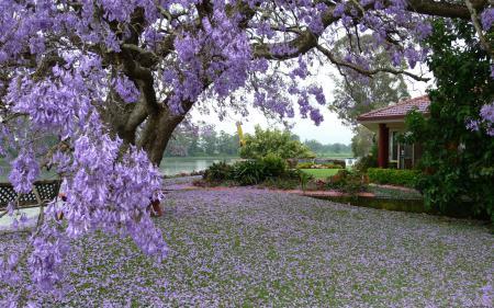 Заставки дерево, цветы, дом