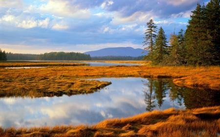 Фото Main, National park, Acadia, лес