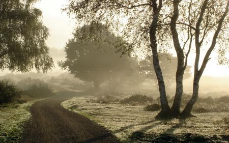 Заставки утро, туман, деревья