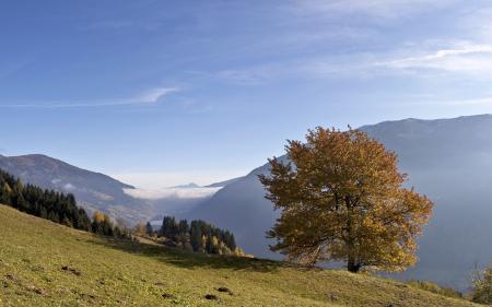Фотографии горы, небо, дерево