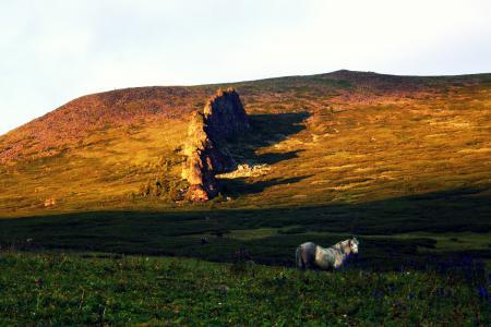 Обои луга, лошадь, трава, цветы.