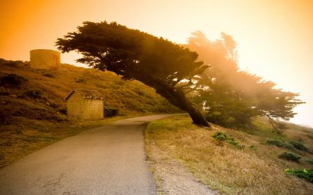 Обои дорога, деревья, закат, природа