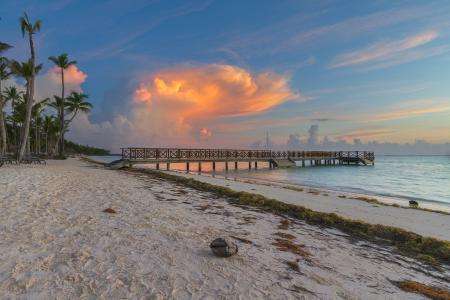 Обои пляж, кокос, пальмы, океан