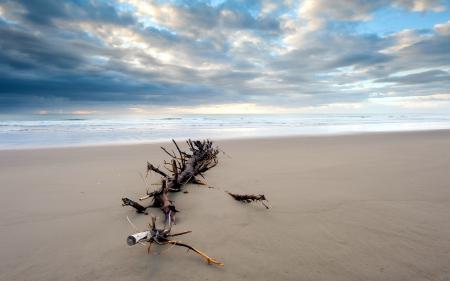 Заставки море, дерево, пейзаж