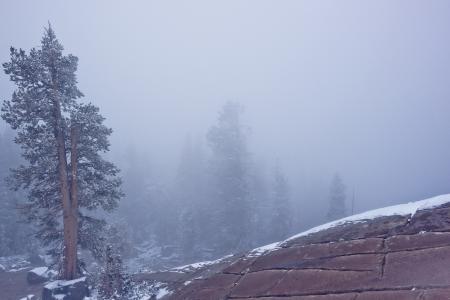 Заставки гора, дерево, туман, природа