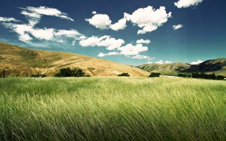Обои пейзаж, луг, колосья, трава