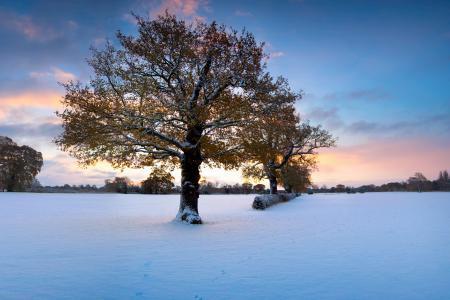 Фотографии зима, дерев, листва, снег