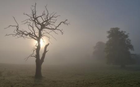 Фото утро, дерево, туман, пейзаж