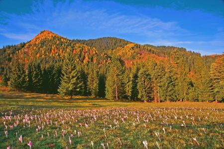 Фотографии румыния, небо, деревья, горы