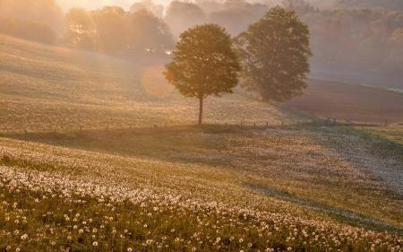 Заставки поле, закат, одуванчики, пейзаж