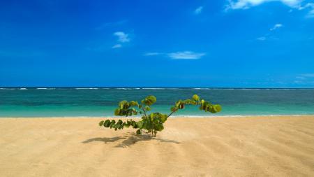 Фотографии пейзажи, Бали, индонезия, растение