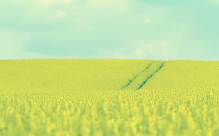 Картинки пейзажи, поле, трава, цветы