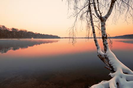 Картинки зима, озеро, дерево, берёза