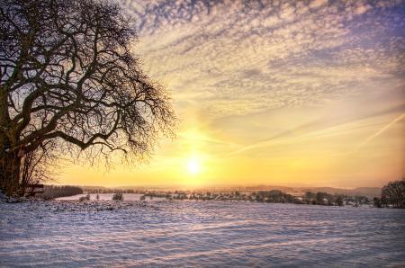 Фото зима, поле, дерево, снег