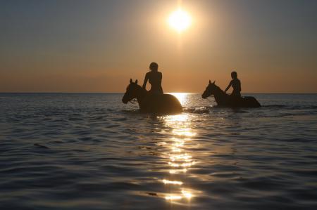Фотографии море, кони, девушки