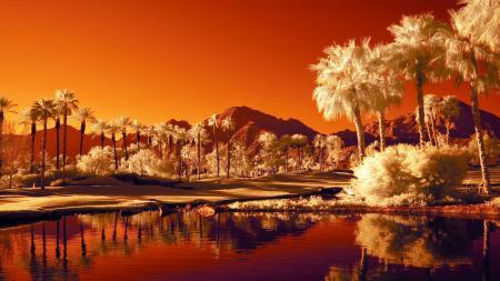 Фотографии пальмы, вода, оазис, горы