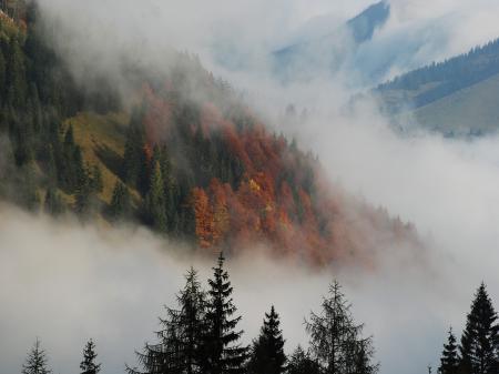 Фото осень, горы, деревья, елки