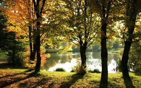 Обои Свет, солнечный, сквозь листву, пруд