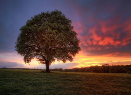 Картинки поле, закат, дерево