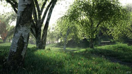 Обои заросли, лес, деревья, трава