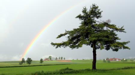 Заставки поле, дерево, радуга, пейзаж