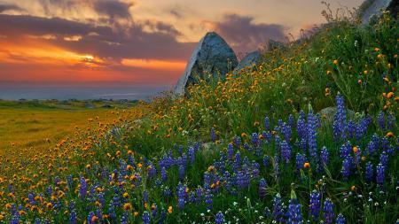 Фотографии природа, закат, цветы, камни