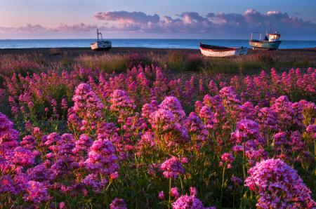 Обои трава, цветы, берег, море