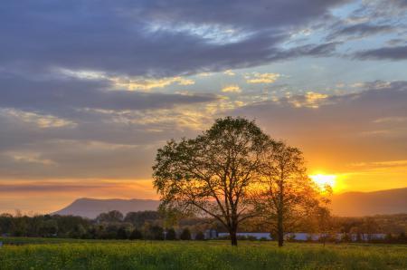Фотографии поле, деревья, закат, природа