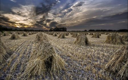 Фото поле, закат, колосья, пейзаж