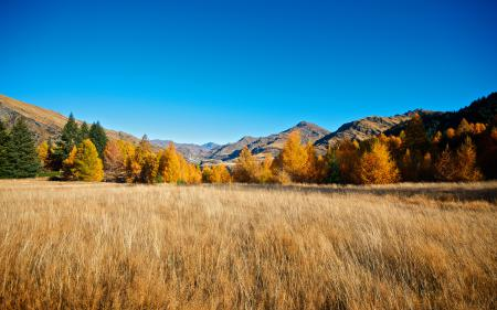 Заставки осень, лес, небо, поле