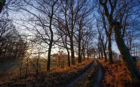 Фотографии утро, дорога, пейзаж