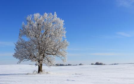 Картинки поле, дерево, зима, пейзаж