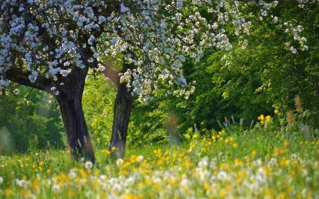 Фото природа, лето, пейзаж