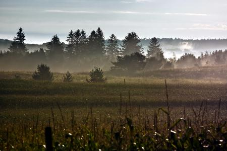 Картинки утро, поле, роса, природа