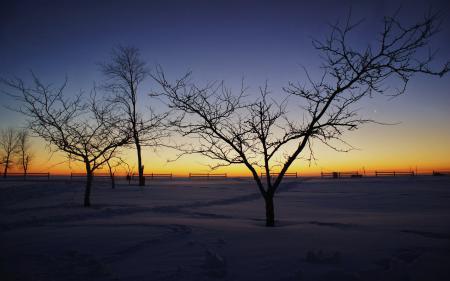 Картинки пейзажи, фото, природа, дерево