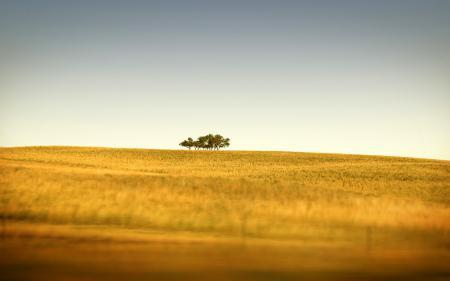 Картинки пейзажи, tilt-shift, холмы, трава