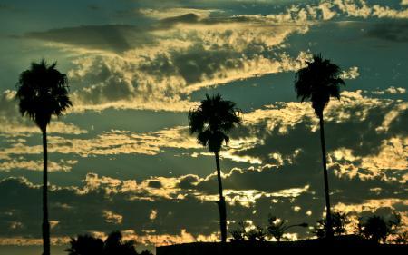 Обои Небо, пальмы, облака