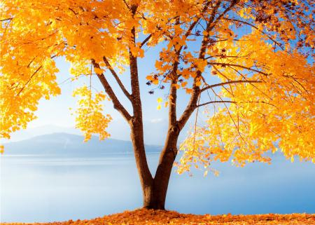 Картинки природа, осень, дерево, золотое