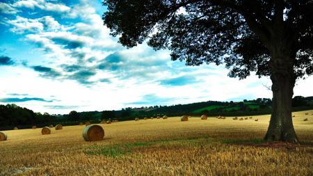 Фотографии пейзажи, дерево, фото, деревья