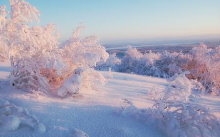 Заставки зима, снег, деревья, север