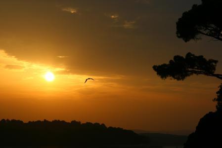 Фото восход, море, чайка, солнце