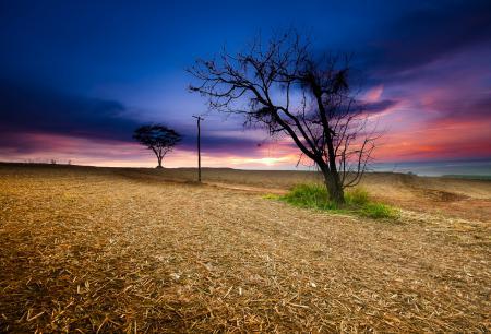 Заставки небо, закат, поле, дерево